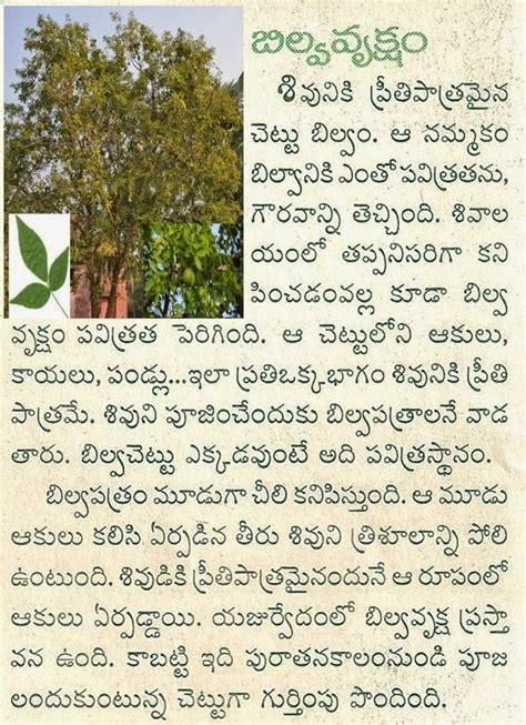 Essay On Mango Tree In Telugu by Telugu Pandagalu Devullu ప డగల మర య ద వ ల ల