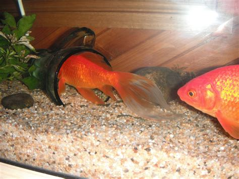 Diy Fish Tank Decorations by Home Made Fish Aquarium Decorated Home Design Elements