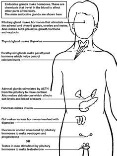 1000 images about nursing endocrine system on pinterest