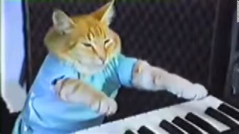 Keyboard Cat Meme - cat that looks like star wars actor adopted cnn