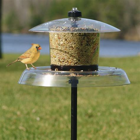 cute bird shelter squirrel proof bird feeder squirrel