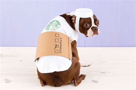 starbucks puppy latte how to dress your like a latte for brit co