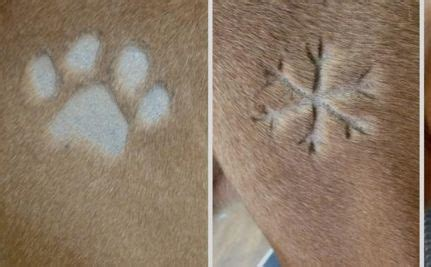 Silinde Shoo For Dogs Mink tattoos want to shave a snowflake into your pooch s fur do you approve of tattoos i