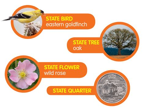 state flower of iowa iowa pictures and facts
