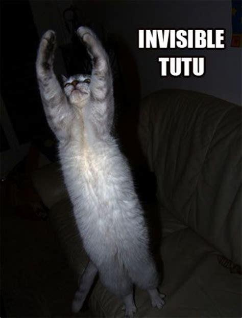 Invisible Cat Memes - invisible cats invisible cat pinterest