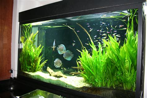 aquarium design exle cool fish tanks live plants aquascape of the month