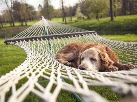 calming sounds for dogs image of animals relaxing on nets sound sleep 1600x1200 free wallpaper