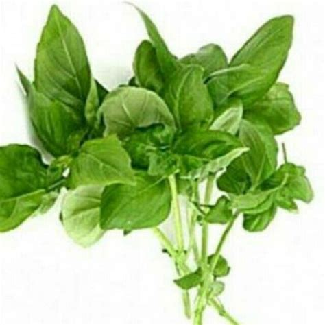 Bibit Cabe Rawit Bara 810 best flower images on flower flowers and flower beds