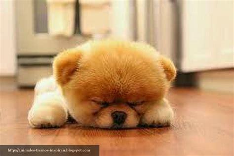 imagenes tiernas de perritos animales tiernos inspiran tiernas imagenes de cachorros