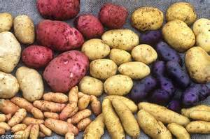 carbohydrates potatoes humans evolved large brains because our ancestors ate