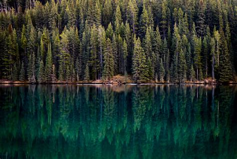 Home Design Ideas 2016 stunning forest photography of canada 99