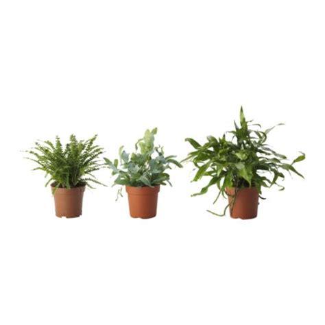 ikea outdoor plants ormbunke potted plant ikea