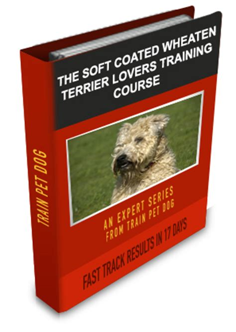 how to your to bark to go potty how to potty your soft coated wheaten terrier