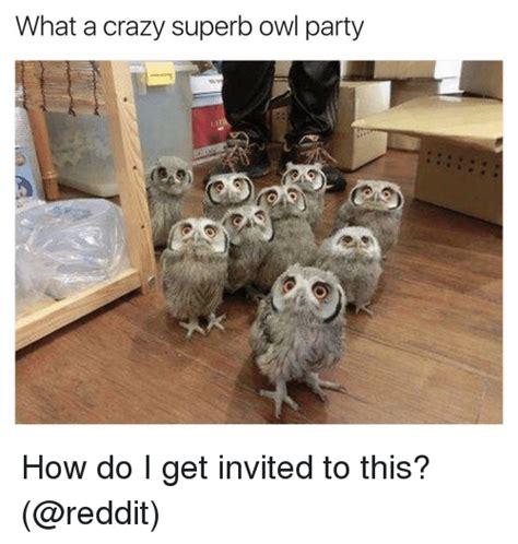 Superb Owl Meme - 25 best memes about superb owl superb owl memes