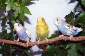 Lovebirds finches and other exotic birds for sale anywhere in the u