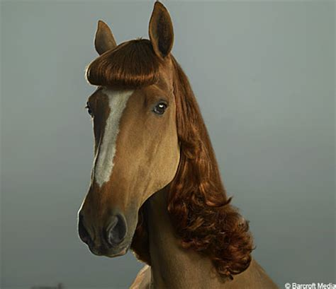 hairstyles for horses horse hairstyles are the mane attraction metro news