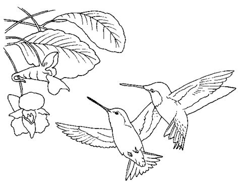 coloring pages hummingbirds flowers deep hummingbird coloring page