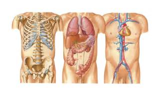 bone archives page 4 of 9 human anatomy chart