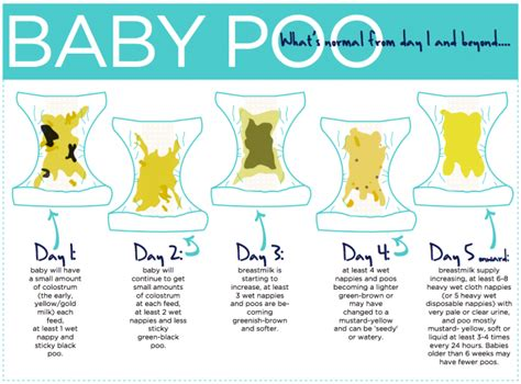 8 signs that tells if your baby s poo is healthy