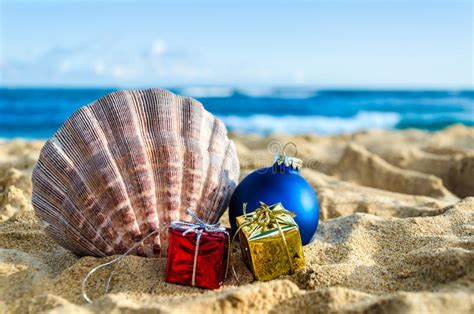tropical beach christmas   year background stock image image  exotic seashell