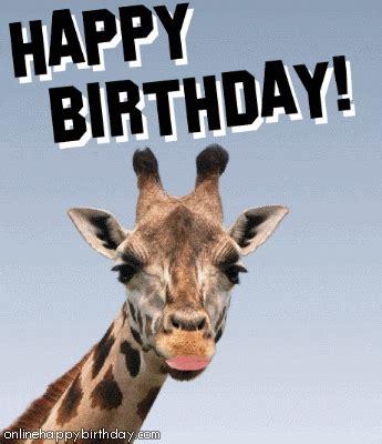 Giraffe Birthday Meme - giraffe gif find share on giphy