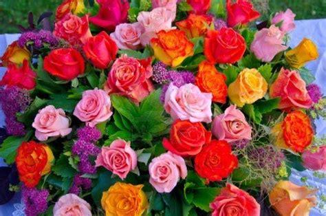 imagenes rosas de todos los colores colores de rosas imagui