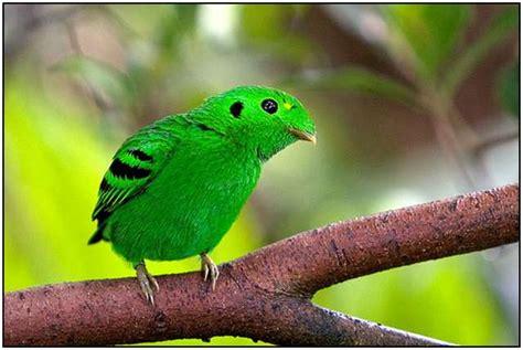 the colorful world of birds fludit com