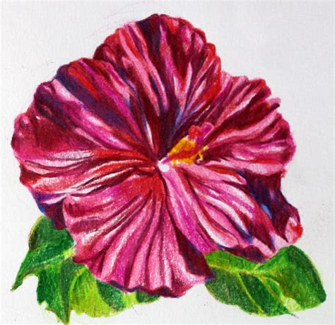 drawing with colored pencils flower colored pencil drawings www pixshark images