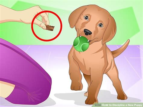 how to discipline a dog after peeing in the house 3 ways to discipline a new puppy wikihow