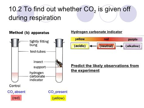 design an experiment to determine if plants respire chapter 10 respiration lesson 1 aerobic and anaerobic