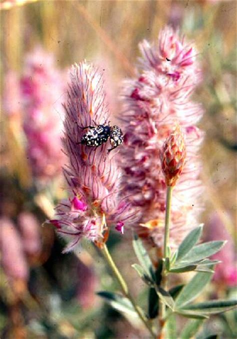 fiori della macchia mediterranea fiori della macchia mediterranea eniscuola