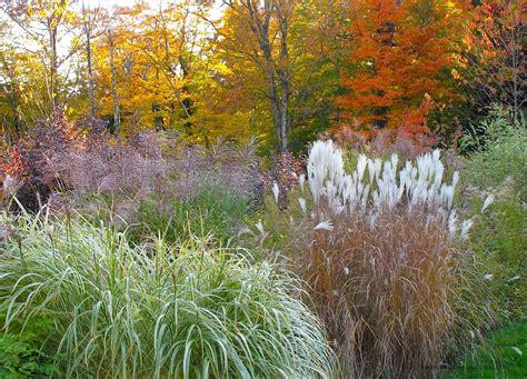 187 autumn garden ornamental grass the gardener s eden