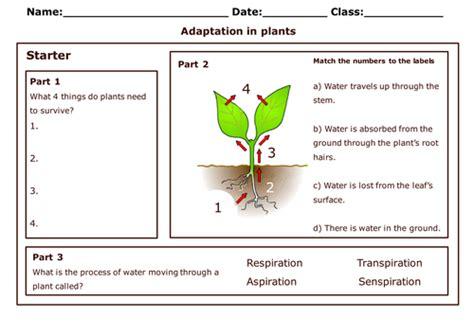 Adaptation Worksheet