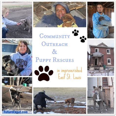 puppy rescue st louis community outreach and puppy rescue in east st louis gateway pet guardians