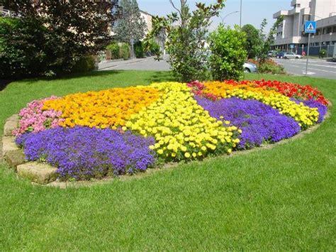 fiori per aiuola fiori gialli nomi piante perenni nomi dei fiori gialli