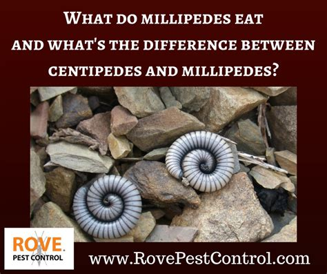 What Do The Different what do millipedes eat and what s the difference between