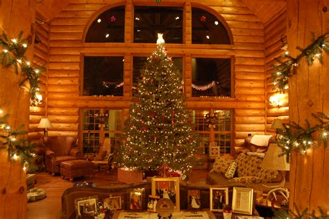 logged netted christmas trees in manchester let your guide bestofhouse net 28866