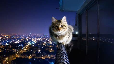 cat cityscape hd wallpaper  ultra hd hd wallpaper