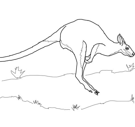 wallaby coloring page printable wallaby coloring pages