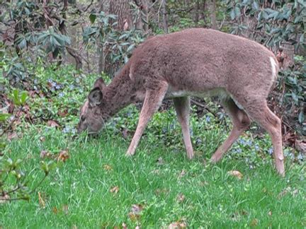 animated deer eating patkashtock | flickr photo sharing!