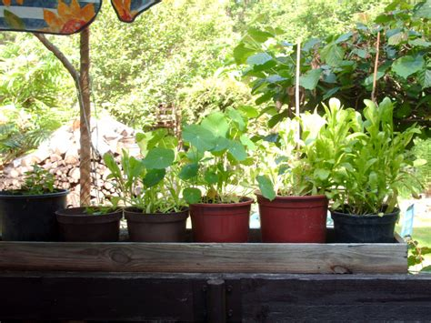 alles fã r den balkon kaufen pflanzen f 252 r den balkon 187 gartenbob de der gartenratgeber