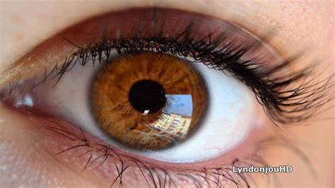 imagenes ojos cafes todas las personas tienen ojos color caf 233 seg 250 n biolog 237 a