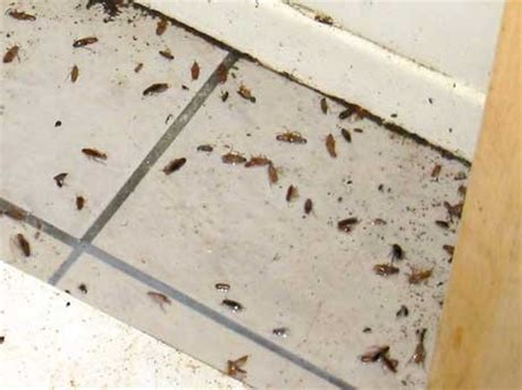 How To Prevent Cockroaches In Kitchen Cabinets 10 Ways To Get Rid Of Roaches In