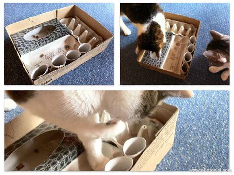 katzen spiel selber machen katzenspielzeug katzen