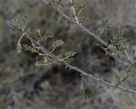 desert plants the ultimate survivors science news for