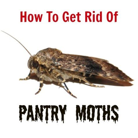 How Do I Get Rid Of Pantry Moths how to get rid of pantry moths 187 how to s 174