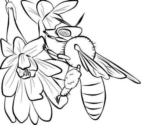 coloring pages of flowers and bees free coloring pages of honey bee cycle