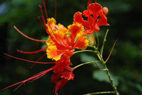 fiori esotici immagini fiore esotico foto immagini piante fiori e funghi