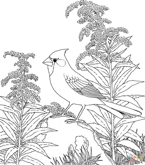 coloring pages of birds and flowers northern cardinal and goldenrod kentucky bird and flower