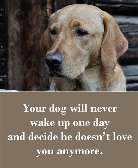 sad puppy love 42 dog sayings which will touch your heart dog animal